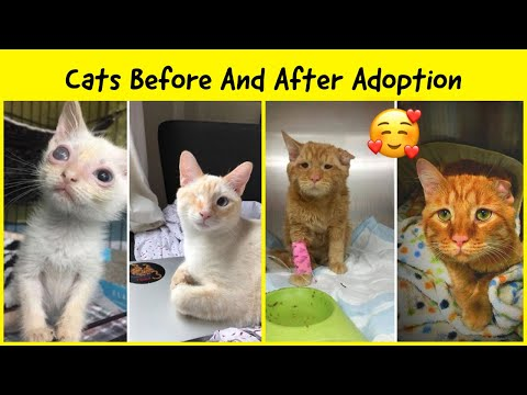 Heartwarming Photos Of Cats Before And After Adoption