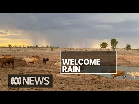 Queensland storms and showers bring more much needed rain to drought-affected areas   ABC News