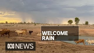 Queensland storms and showers bring more much needed rain to drought-affected areas | ABC News