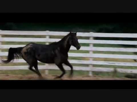 Wild Horses ~ Flicka ~