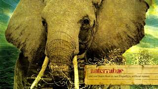 Anterrabae - And Our Heart Beat In Our Fingertips, Without Reason (2006) YouTube Videos
