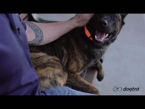 Ep.10 - K9 Dog Training with Mike Ritland: Public Obedience