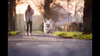 Собака убегает при выходе из дома.