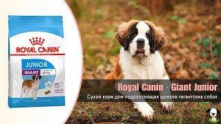 Сухой корм для подрастающих щенков гигантских пород собак · Royal Canin Giant Junior