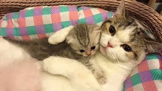 Mother Cat and Cute Kittens 😍 Best Family Cats Comilation 2018