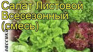 Салат листовой (Всесезонный (смесь)). Краткий обзор, описание характеристик, где купить семена