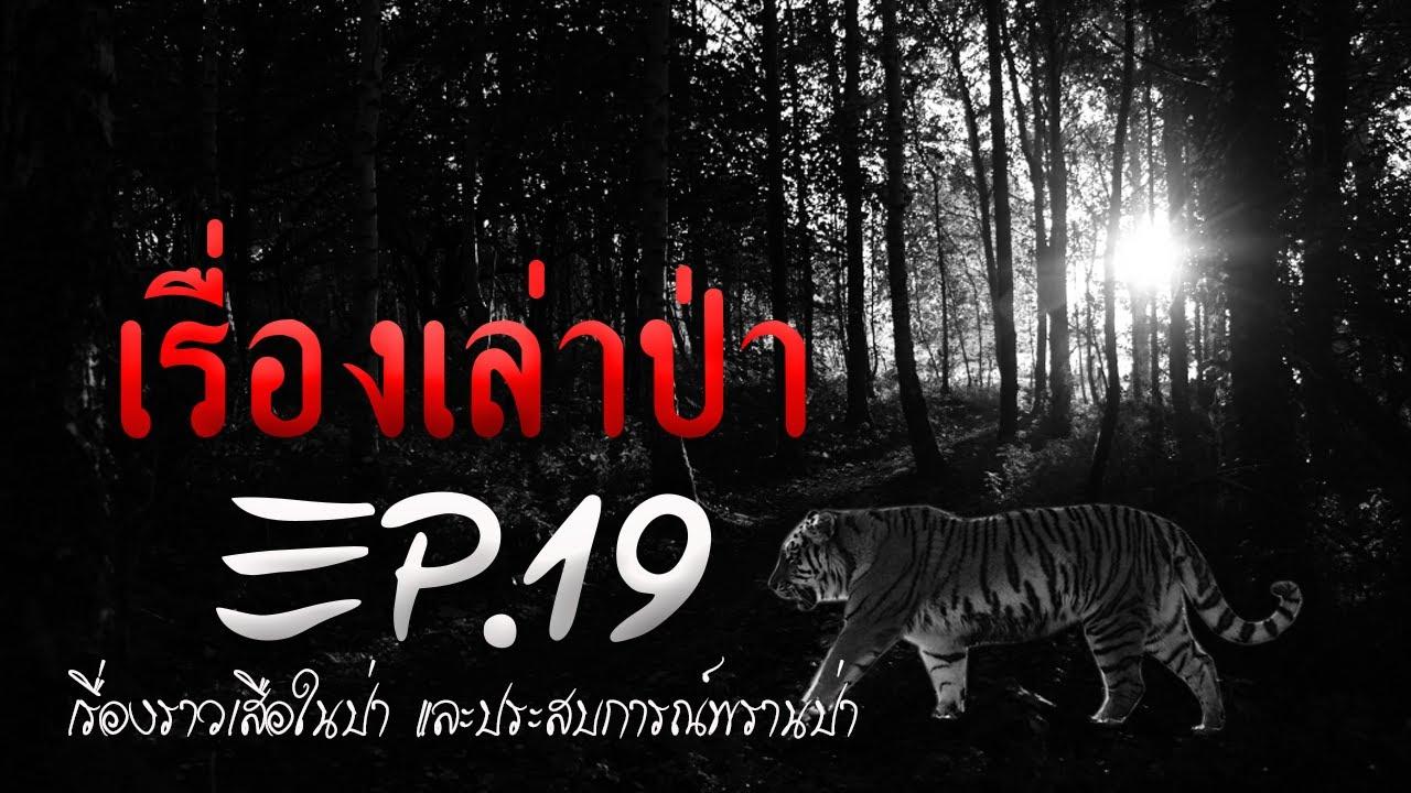 เรื่องเล่าป่า EP.19 : เล่าเรื่อง story