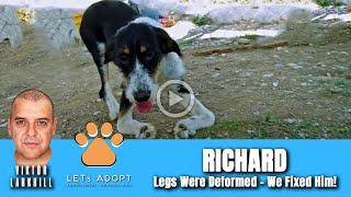 Hope Rescues Dog With Twisted Front Legs Named Richard - @Viktor Larkhill Extreme Rescue