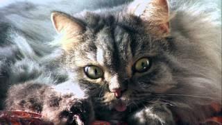 Памяти кота Тимофея