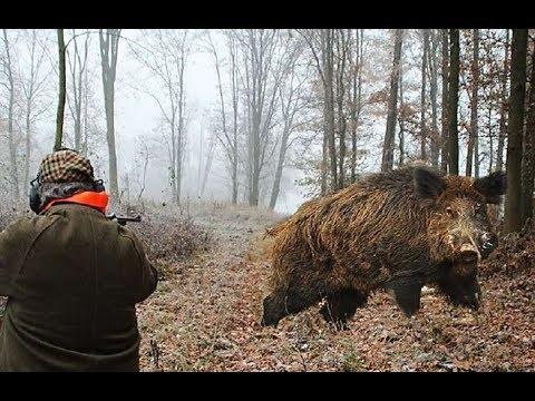 Top 5 de tir de sanglier chasse top 5 best shots wild - Comment cuisiner des cotes de sanglier ...