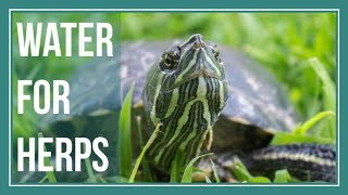 What Types of Water are Best for Reptiles & Amphibians?