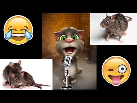 चूहे का शेहरा सुहाना लगता है |  Dhadkan | Most Funny Song By Talking Tom | Latest Funny Song