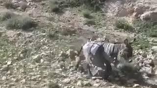 سقوط خر