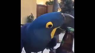Открывашка супер мега классный попугай (Попугай открывает пиво)