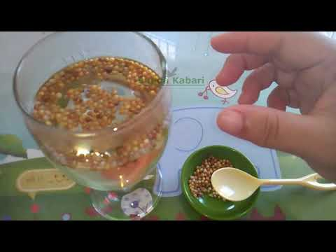 Turunkan Kolesterol Dengan Bawang Putih