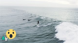 Dolphins Jump Beside Surfer on LA Coast