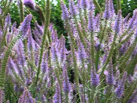 RHS Garden Wisley - Surrey #8