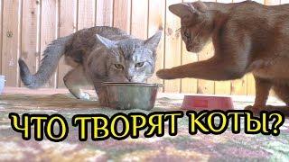 VLOG: переехали в дом на даче | новый монстр в нашей семье | кот Кевин гуляет