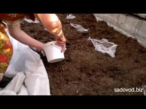 Правильный полив рассады огурцов