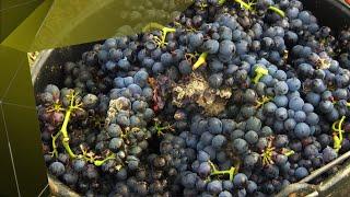 L'effet destructeur du climat sur les vins de Bourgogne