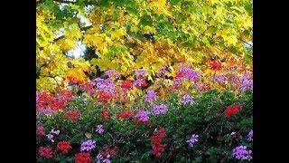 Fleurs, Fruits et Feuilles d'Octobre à Evian
