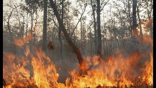 Վայոց ձորում 250 հեկտար բուսածածկ տարածք է այրվում