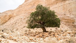 Beit Guvrin-Maresha National Park. Columbaria, frescoes, concerts in caves. Church, amphitheater