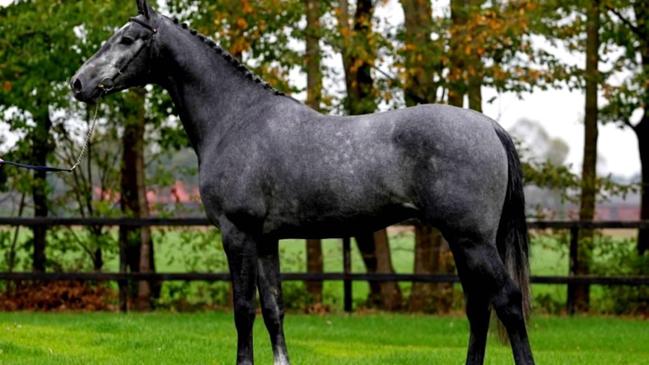 лошадь гнедая фото