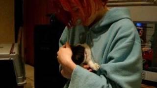 ANNIKA MEETS THE BABYCATS