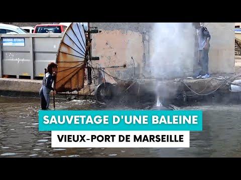 Sauvetage de la baleine du Vieux-Port de Marseille - 18 octobre 2017