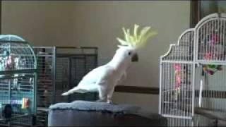 танцующий попугай(, 2012-02-25T16:47:37.000Z)
