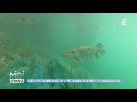 Les alpes maritimes un vivier pour les poissons d 39 eau for Vivier a poisson