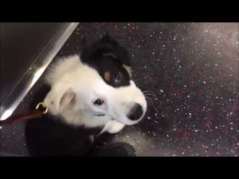 Puppy's first Time on Subway | NYC Service Dog Training