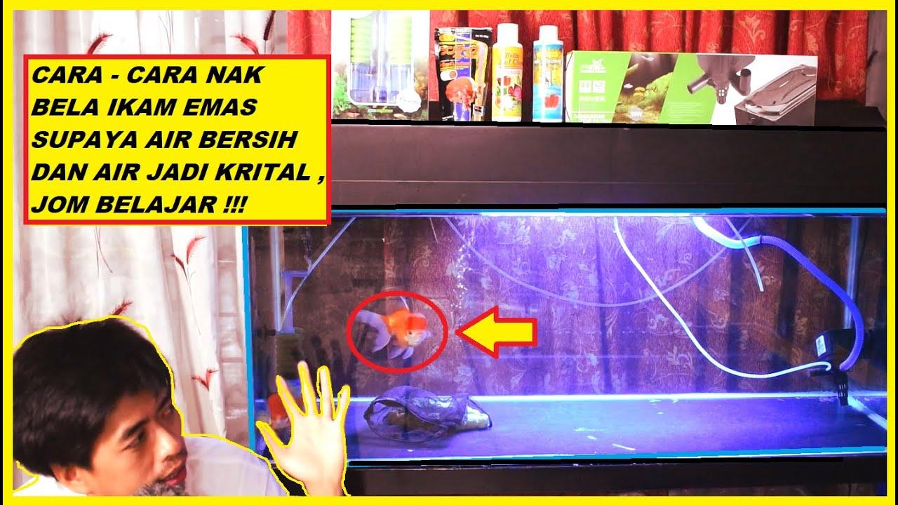 Download PANDUAN PENUH MEMBELA IKAN EMAS ATAU LAIN - LAIN IKAN ( TIPS AIR JERNIH JOM BELAJAR )