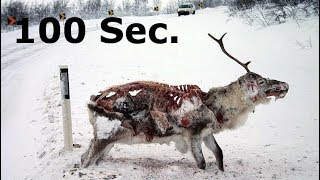 Why you should care about the zombie deer epidemic (CWD) | 100 Seconds