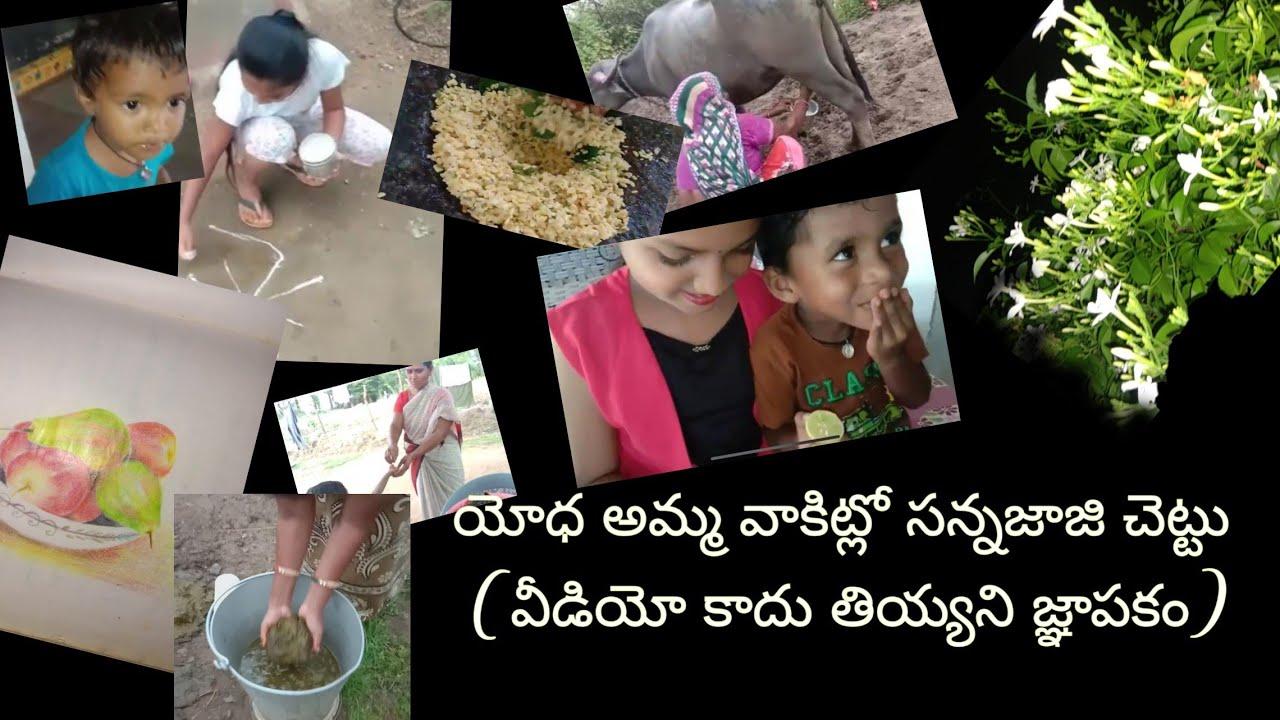 #Vlog#జబర్దస్త్#bestvlog  యోధ అమ్మ వాకిట్లో సన్నజాజి చెట్టు ఈ (వీడియో కాదు తియ్యని జ్ఞాపకం)
