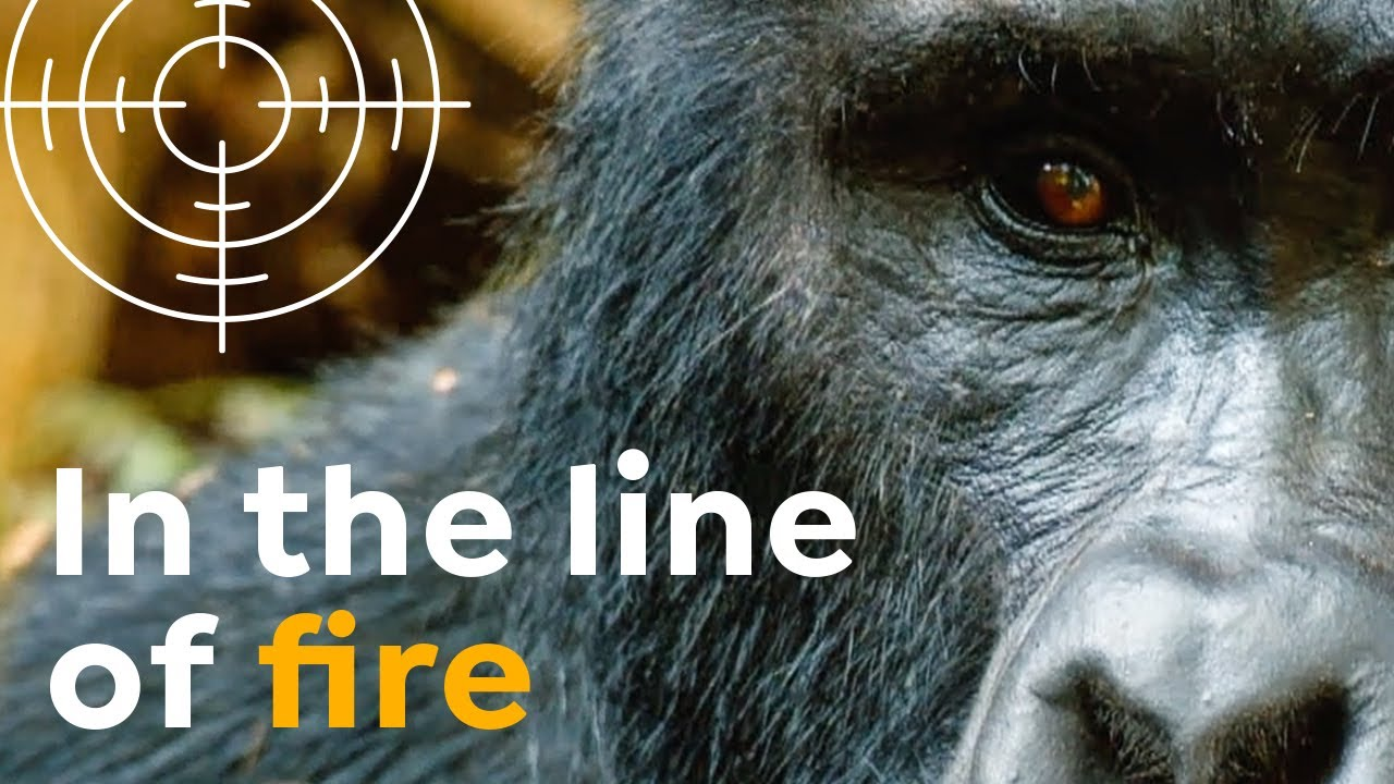 Wildlife in the Line of Fire | National Parks under Attack