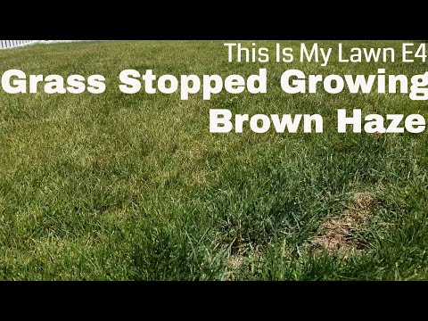 DIY How to fix My Lawns Not Growing, hazy brown, over watered lawn. This is my lawn E4.