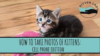 How to Take Photos of Kittens: Cell Phone Edition thumbnail