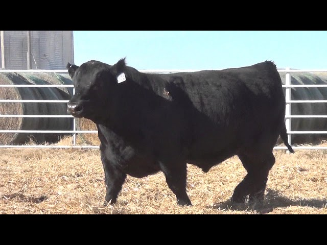Express Ranches Lot 358