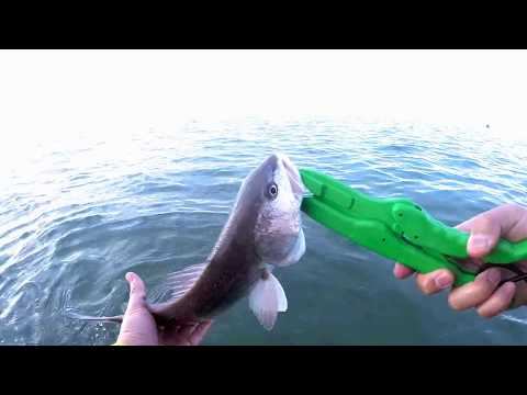 Wade Fishing for Specks and Reds in West Bay