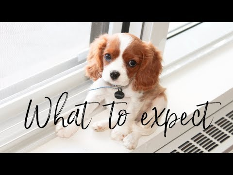 WHAT TO EXPECT WHEN GETTING A PUPPY | Things you should know when getting a dog