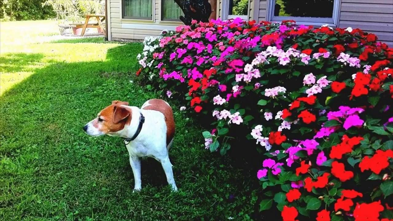 flower garden plans for beginners