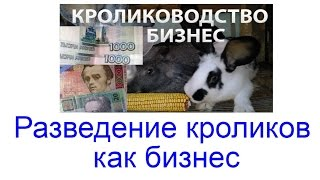 Бизнес в деревне,как заработать на выращивании кроликов