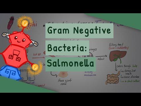 Gram Negative Bacteria: Salmonella