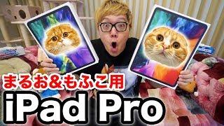【開封レビュー】iPad Pro2020 フルスペックをまるお&もふこのために購入【メッセージ刻印入り】