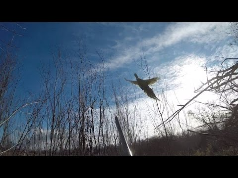Hunt Club Pheasant Hunting