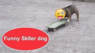 Funny Sk8er dog ★ FUNNY Video 😂 lol 2017