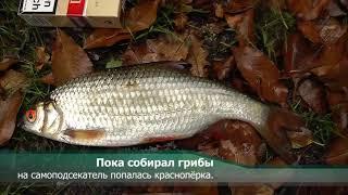 Download Бесплатный самоподсекатель для рыбалки Mp3 and Videos