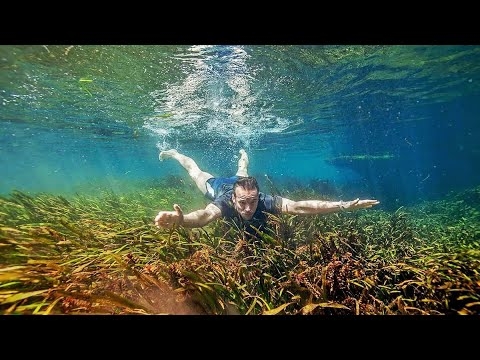 VLOG - Aquatic Plant Hunting In The Florida Springs With Chris Lukhaup